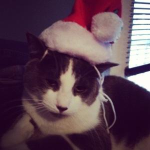 Christmas Cat!