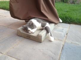 Loungecat